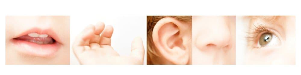 De 5 klassieke zintuigen; horen, zien, ruiken, proeven en voelen.